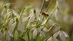 Frühlingshaft