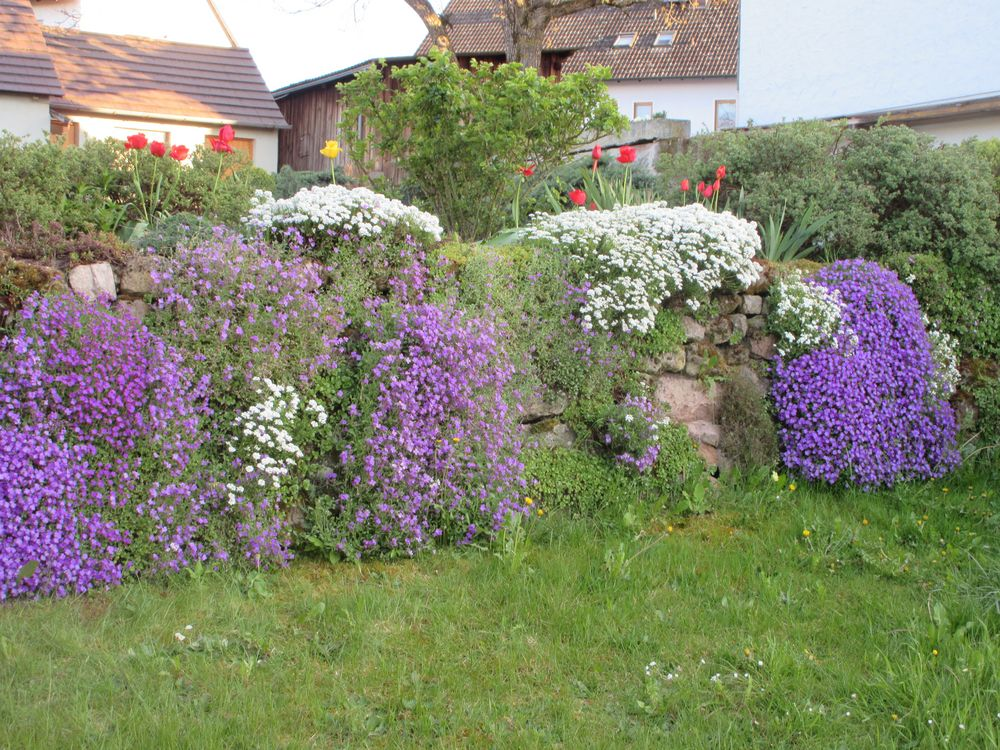 Frühlingshafte Blumenmauer
