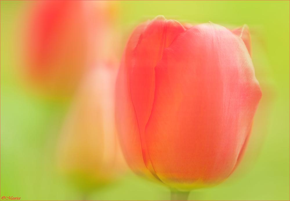 Frühlingshauch