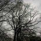 Frühlingshimmel in grau