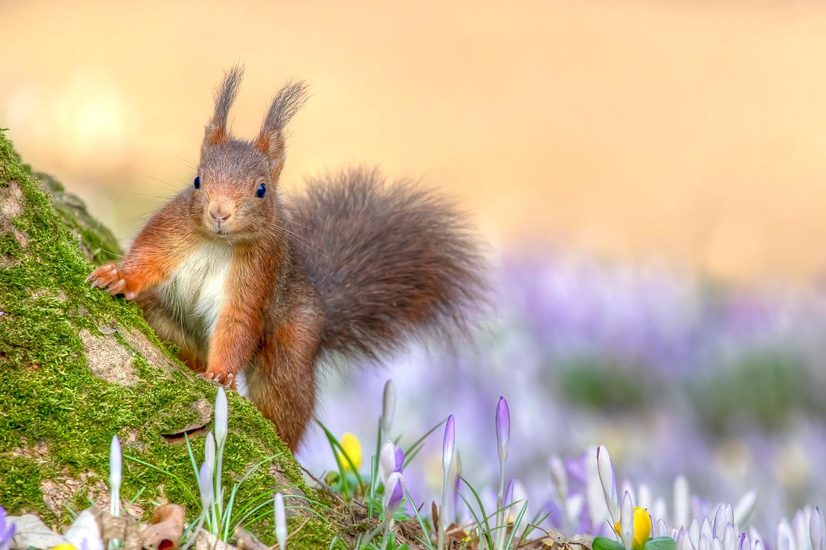 Frühlingshörnchen