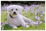 Frühlingshund Enrico