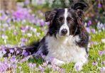 Frühlingshund Paul
