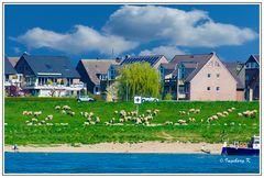 Frühlingsidylle am Rhein