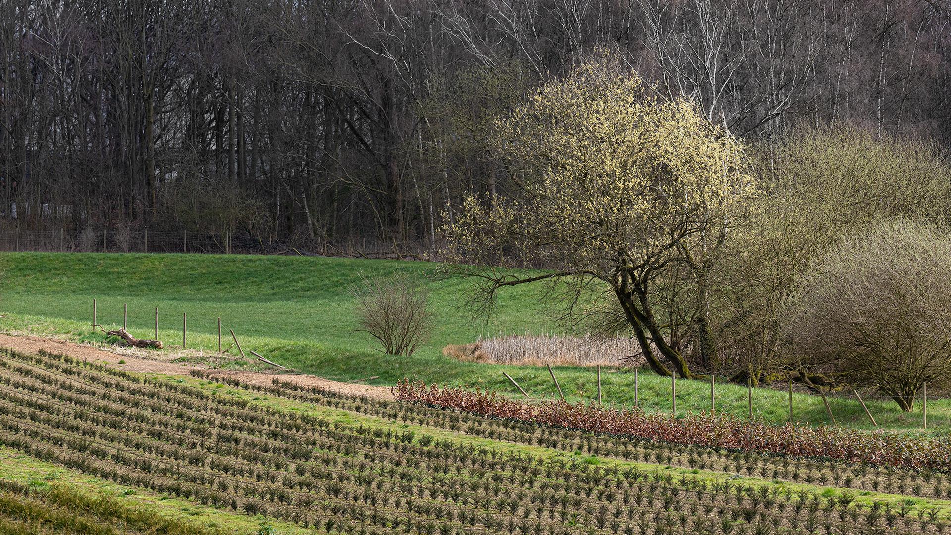 Frühlingsidylle im Kohlenpott