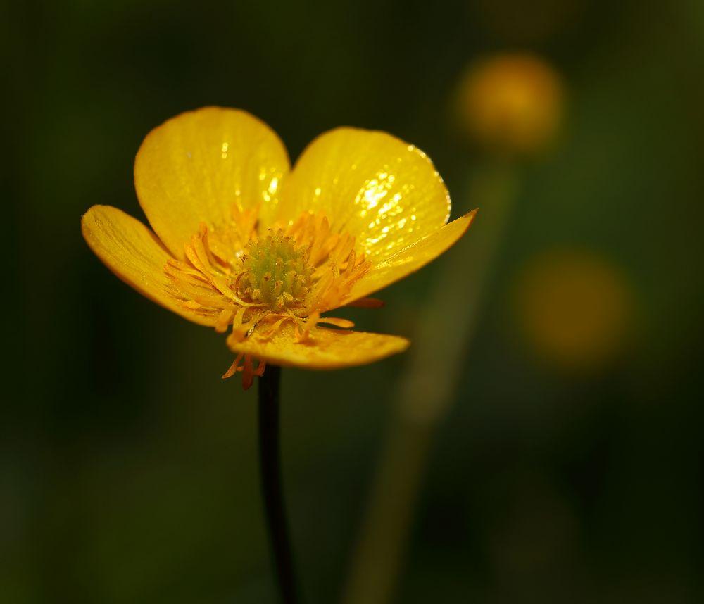 Frühlingsimpression in Gelb und Grün