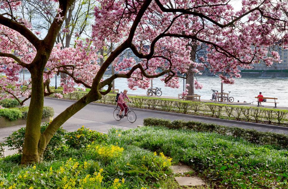 Frühlingsintermezzo