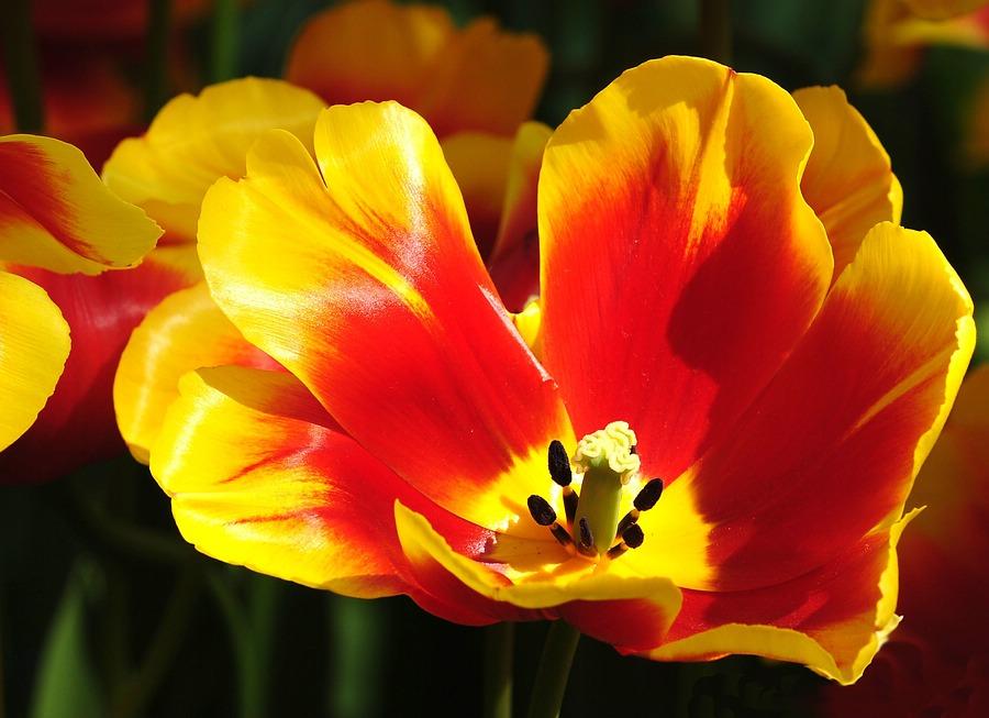Frühlingskelch