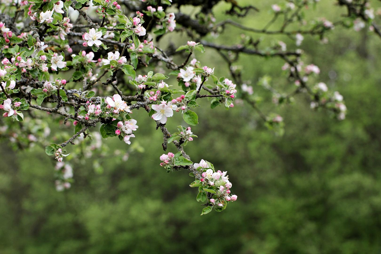 Frühlingsknospen.....