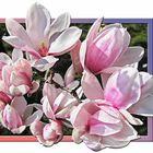 Frühlingskomposition mit Magnolien