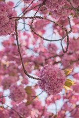 Frühlingskugel