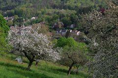 Frühlingslandschaft im Neckartal