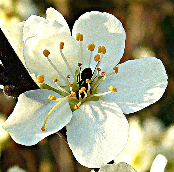 Frühlingsleckerbissen