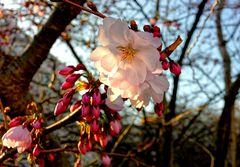 ... Frühlingsleuchten ...