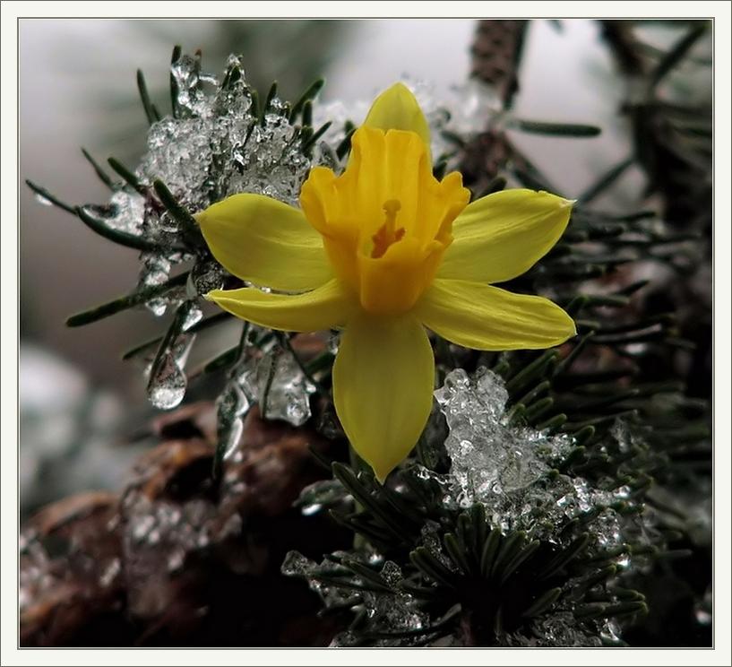 Frühlingsleuchten