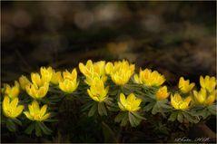 Frühlingsleuchten in der Karlsaue.