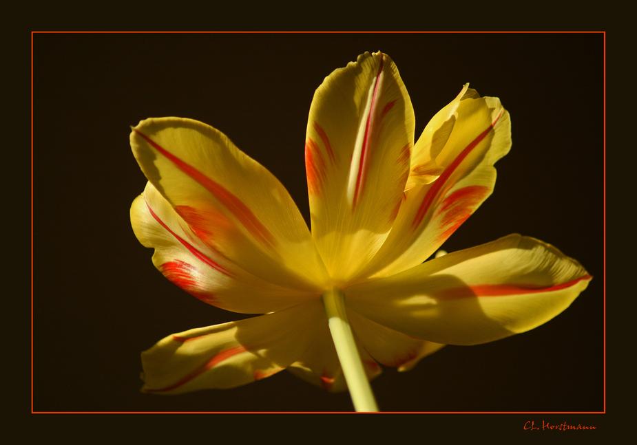 ...Frühlingslicht...