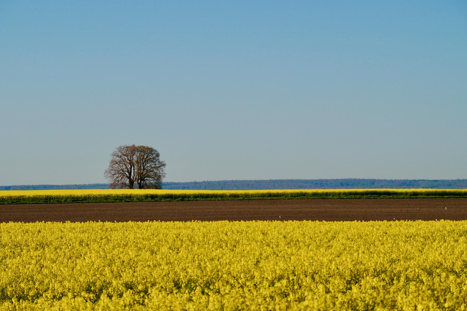 Frühlingslinien