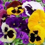 - Frühlingsmeeting  -