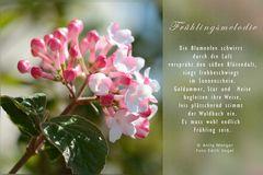 Frühlingsmelodie
