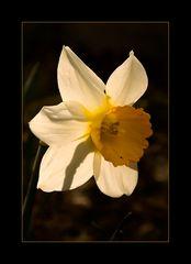 FrühlingsMoment