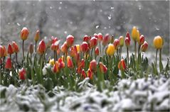 Frühlingsmomente