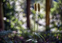 Frühlings....morgen