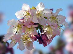 Frühlingsmotiv par excellence