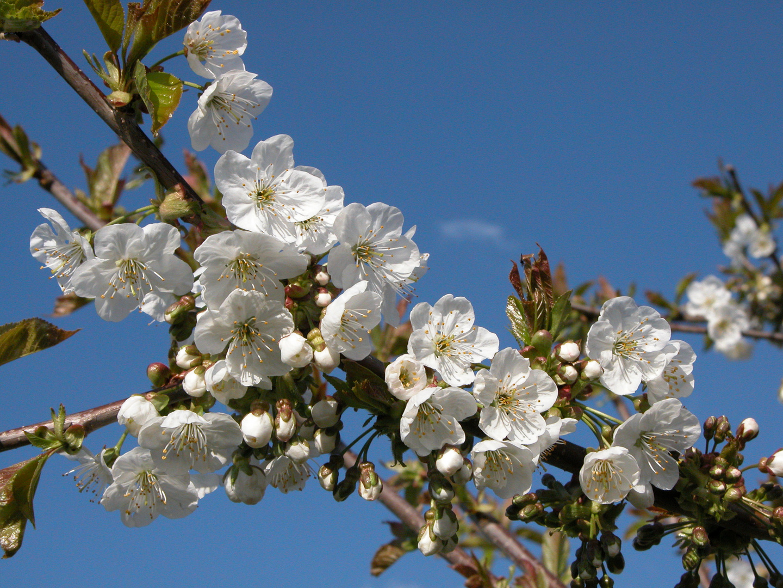 Frühlingsnachlese