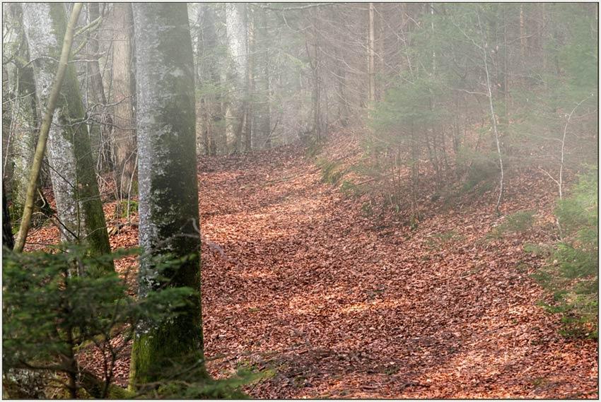 Frühlingsnebel und Herbstlaub ;-)