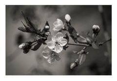 Frühlingsnostalgie