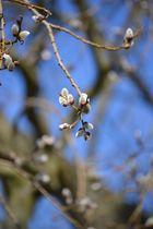 Frühlingsperlen