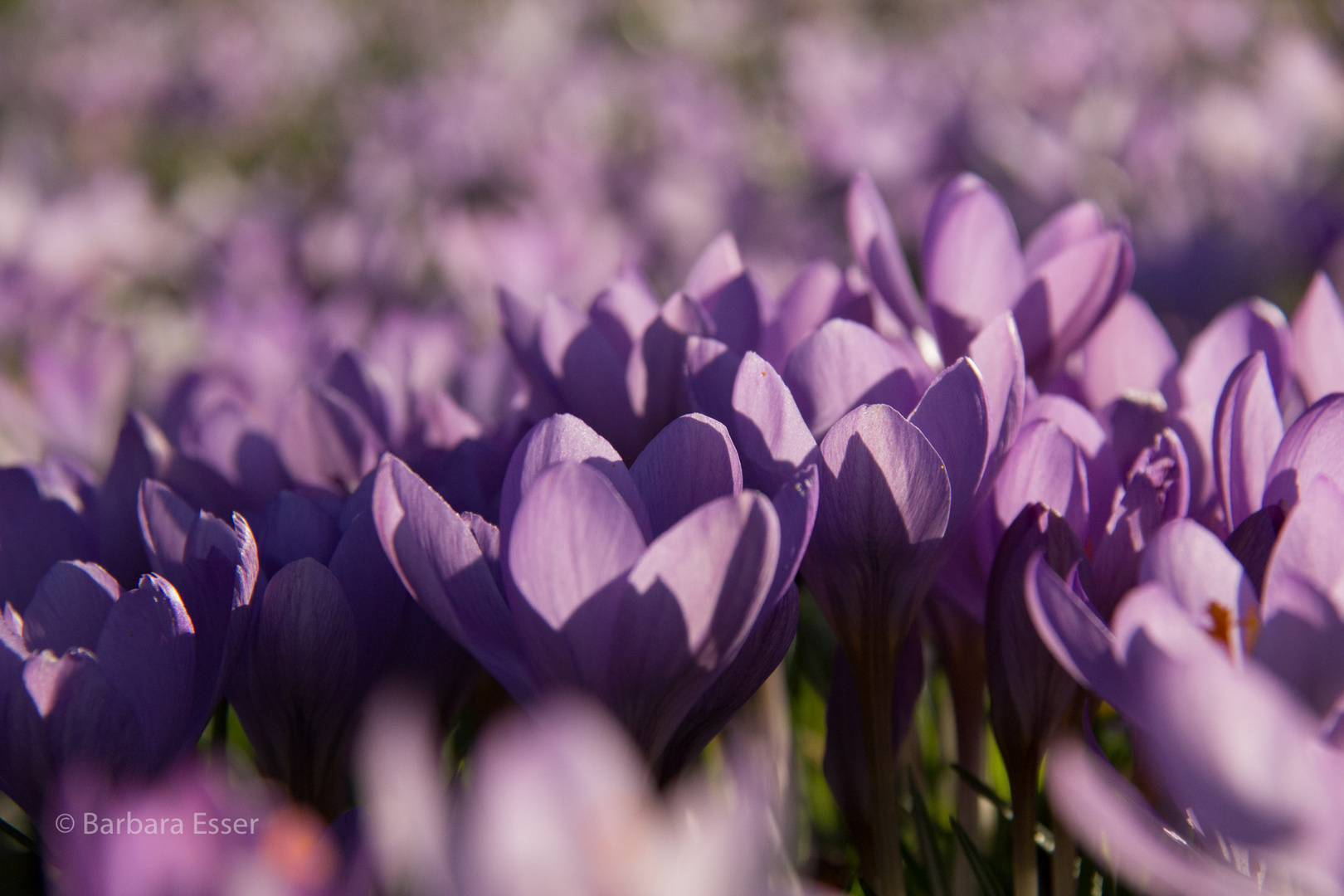 Frühlingspower