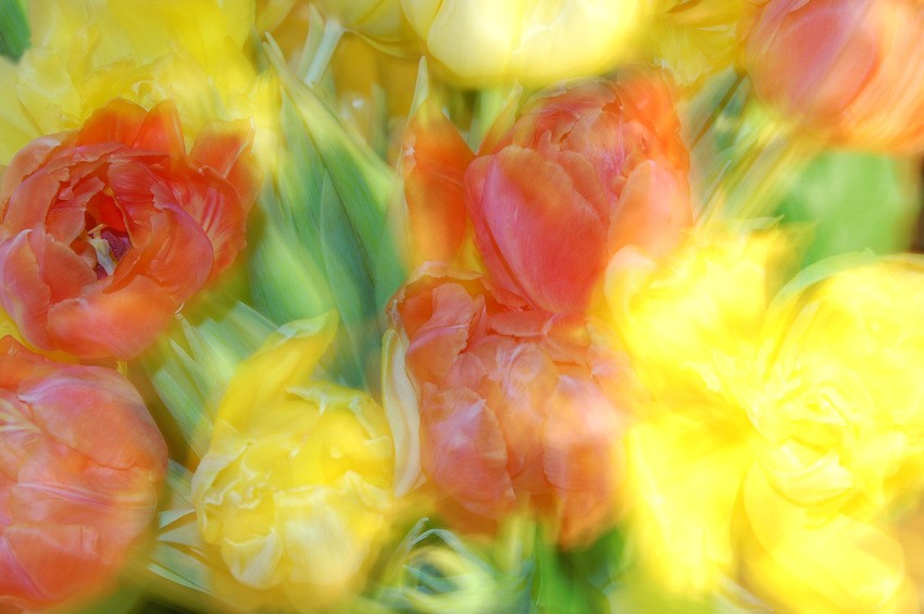 Frühlingsrausch