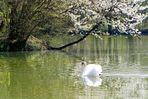 Frühlingsromantik