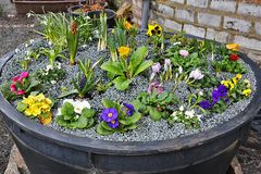 """Frühlingsschälchen""   500 Liter am 13.3. bepflanzt"
