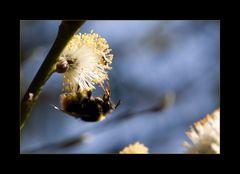Frühlingsschlürfen