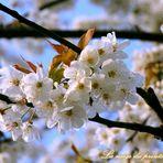 Frühlingsschnee