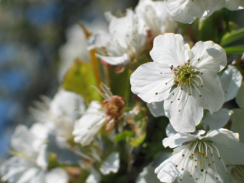 Frühlingssegen