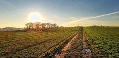 Frühlingssonne überm Feld