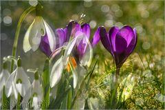 Frühlingsspiel