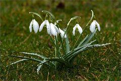 Frühlingssschauer