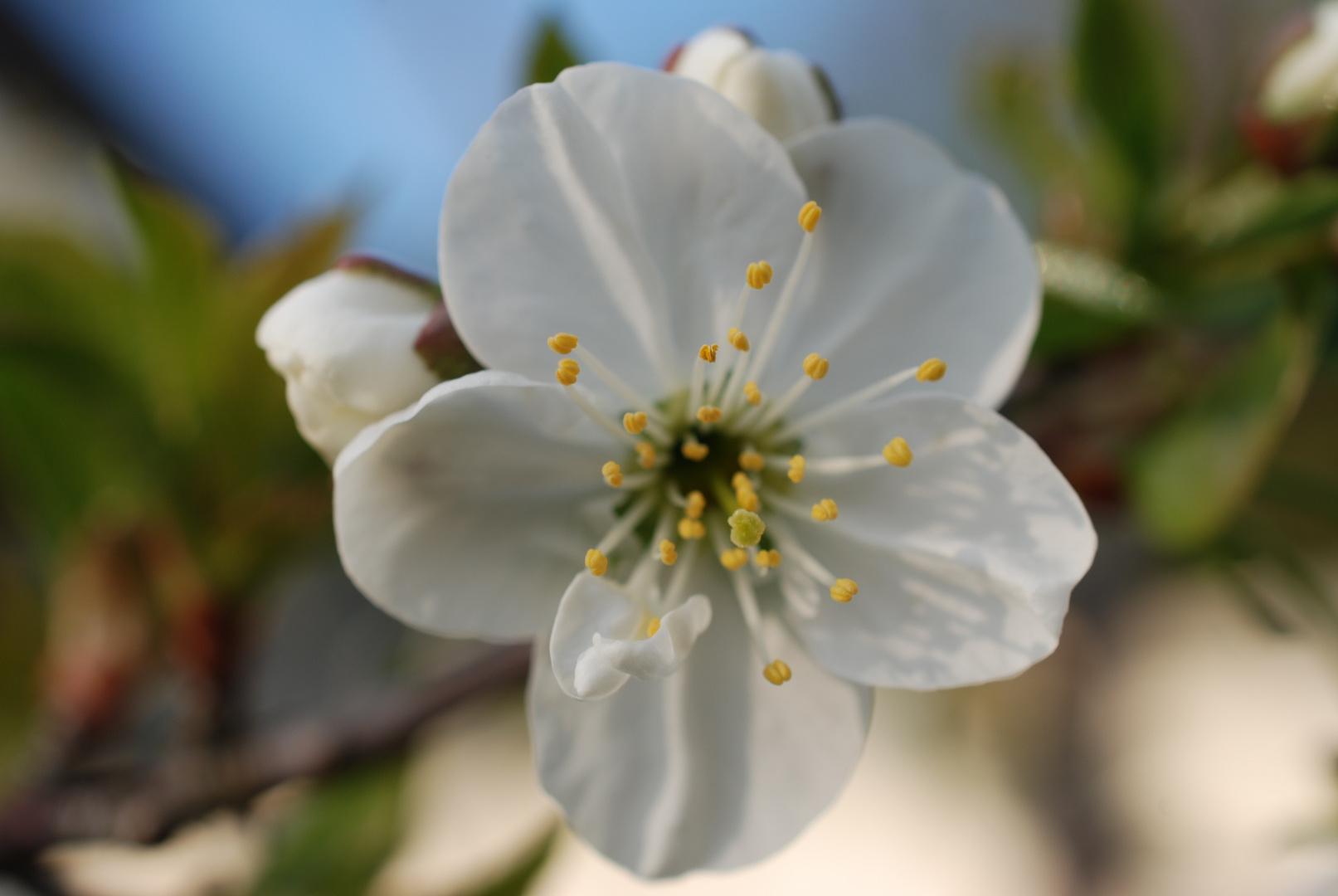 Frühlingsstart II