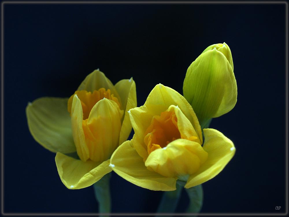 Frühlingsstimmung (3)