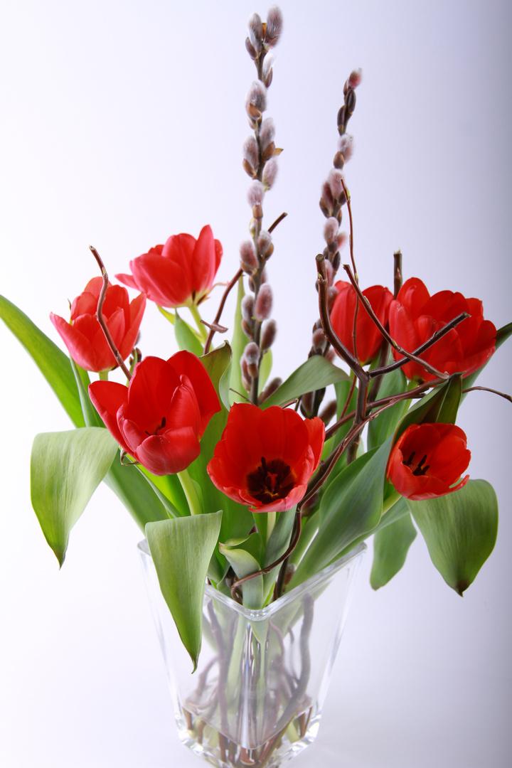 fr hlingsstrau foto bild pflanzen pilze flechten bl ten kleinpflanzen. Black Bedroom Furniture Sets. Home Design Ideas