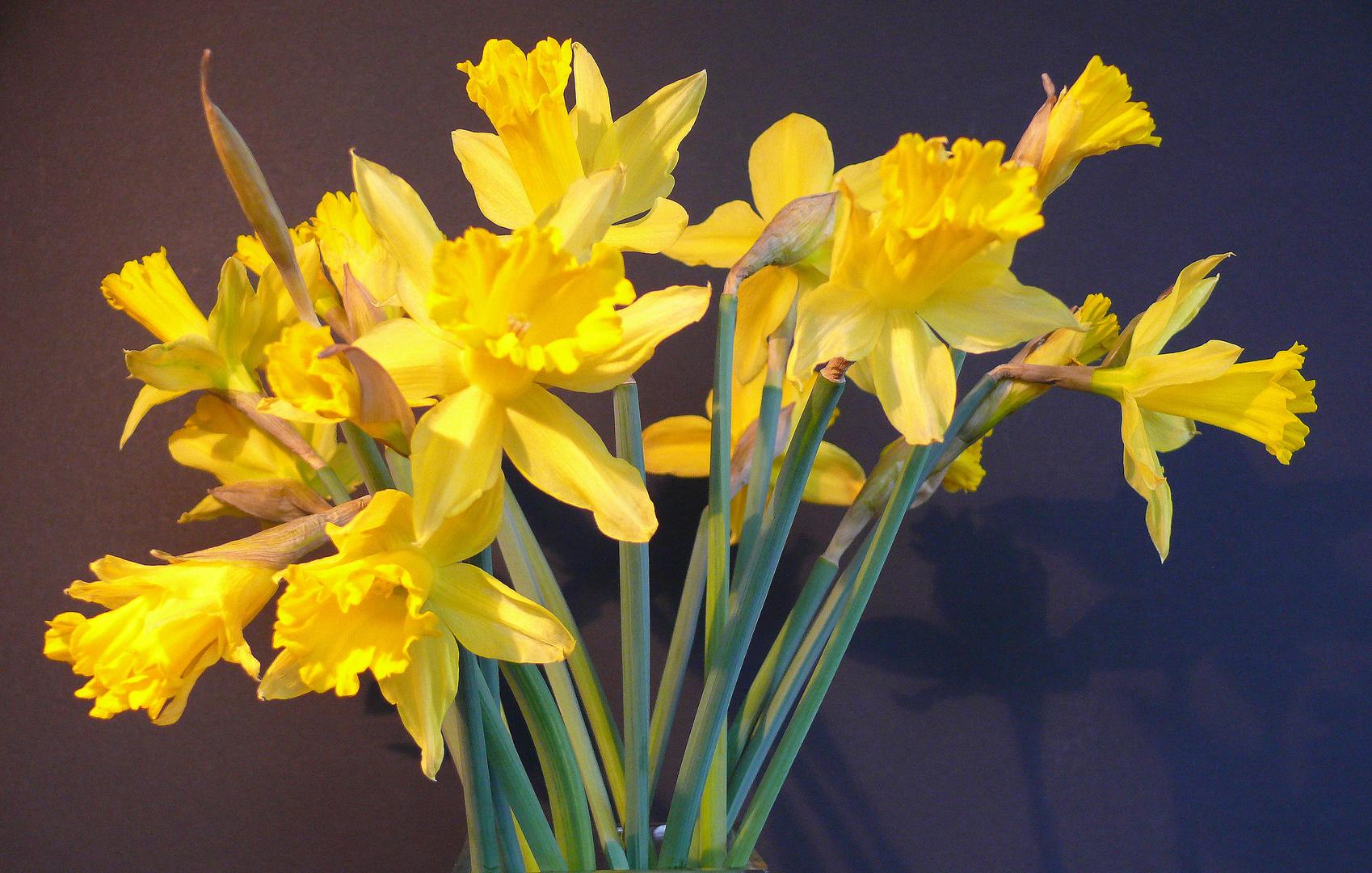 fr hlingsstrau foto bild pflanzen pilze flechten bl ten kleinpflanzen gs flora. Black Bedroom Furniture Sets. Home Design Ideas