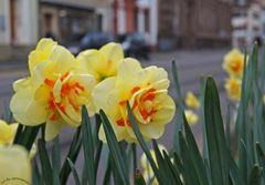 ' Frühlingssuche in Basel.... '