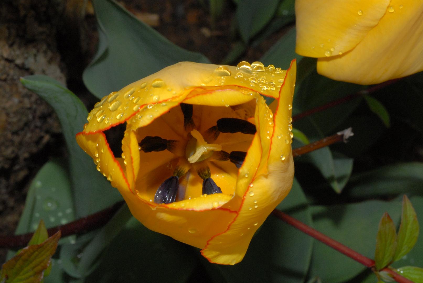 Frühlingstau 2