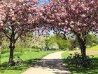 Frühlingstor
