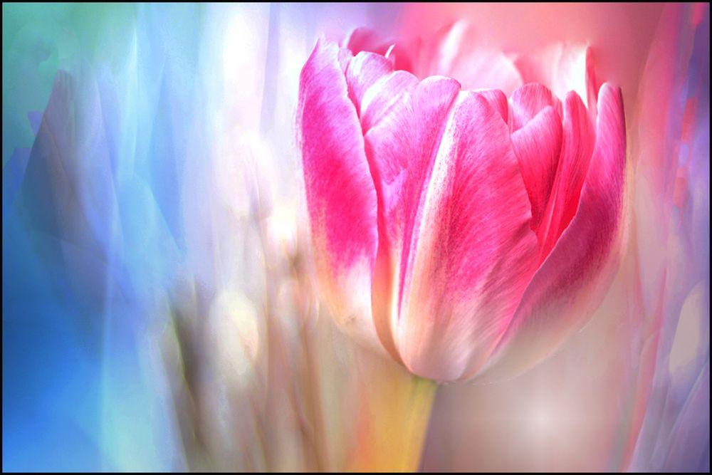 Frühlingsträume..